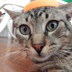 ビックリした猫